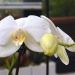 Divagazioni floreali